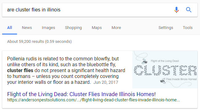SERP for are cluster flies in illinois